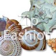 philippines sea shells or raw shells
